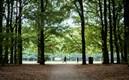 Pildammsparken, jogging, bokskog, höst, malmömiljö